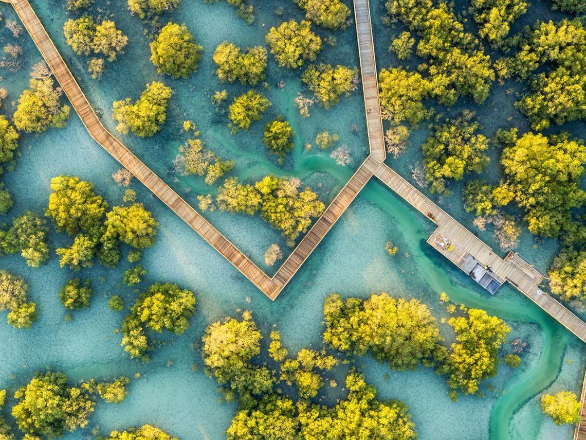 Die natürlichen Mangrovenwälder Abu Dhabis