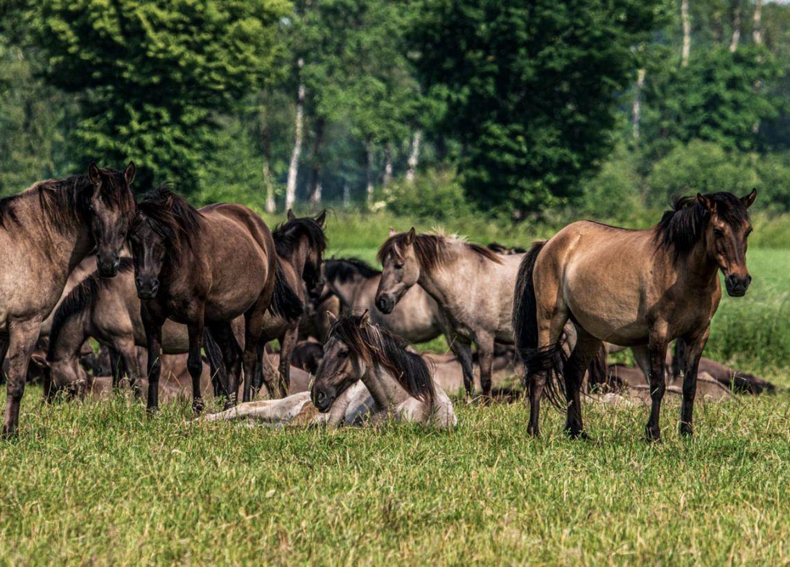 "Deutschlands ""Wilder Westen"": Hier leben Flamingos, Highlander, Moorlandschaften und Mustangs"