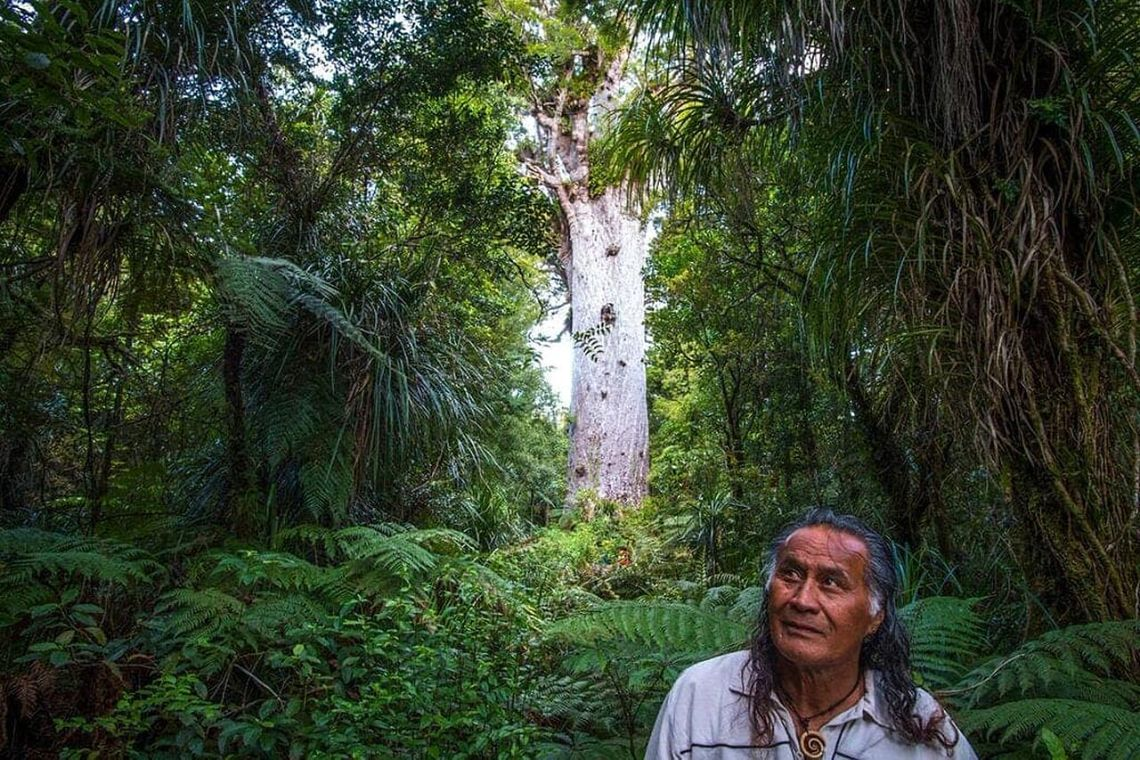 Neuseeland: Footprint Waipoua Touren, Nordland